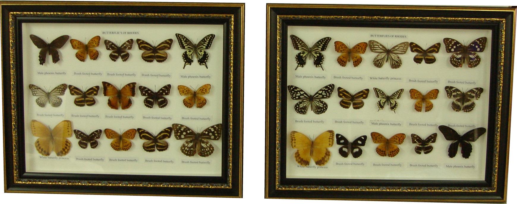 коллекция бабочек. фото